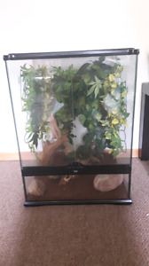 Adorable crested gecko *GREAT DEAL*