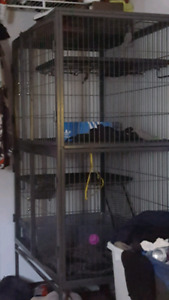Large animal cage  for200obo