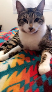 1 year old kitten neutered looking for a home
