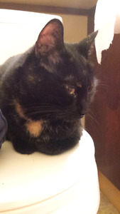 Affectionate Torti