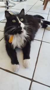 Missing Cat in the West End