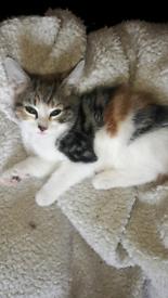 3 gorgeous tabby kittens