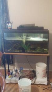35 gallon aquarium