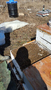 Bees / Beekeeping Business / Bee Farm for sale