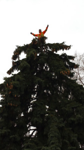 MARKHAM TREE SERVICES