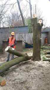Free Quotes: Affordable Storm Damage Cleanup