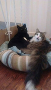 Beautiful and loving cats for adoption