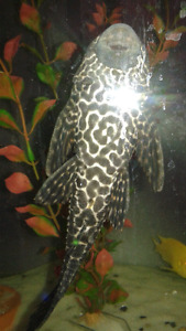 Pleco's I have a bunch