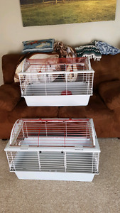 Guinea Pig/ small animal supplies