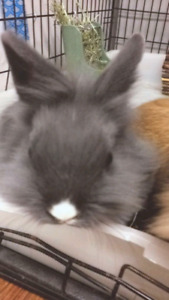 New Price $25 Dwarf Bunnies