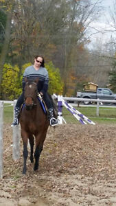 7 year old TB Mare for sale/trade Stratford Kitchener Area image 2