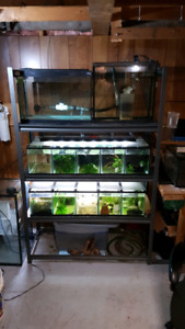 All in one aquarium breeding system
