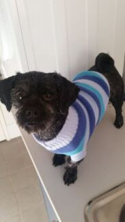Wanted a small puppy/dog for big active dog loving family Wattle Grove Kalamunda Area Preview