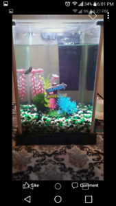 Fish tank for sale FISH NOT INCLUDED