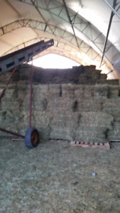 1st crop small sqaure bales of hay