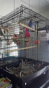 PARAKEET AND MEDIUM CAGE / LARGE BAG OF FOOD & ACCESORIES