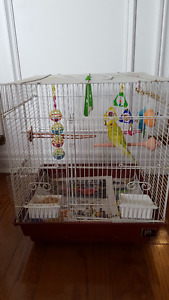 A female budgie and cage on sale