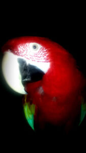 Friendly adorable macaw for sale with cage and accessories