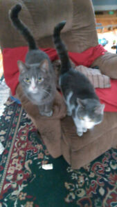 2 free cats must go this weekend