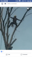 Are you looking to get tree work done?  Call us today