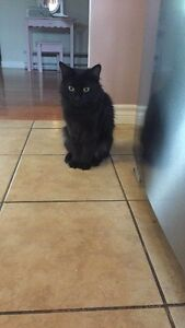 Meet Mila! Looking to rehome our sweet girl to a suitable family