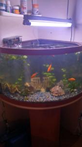 Aquarium 55 gallons avec meuble