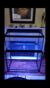 40 gallon tank, lights and stand