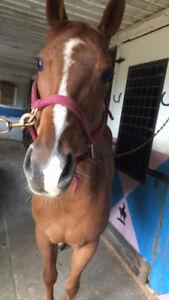 Demi-pension cheval