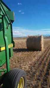 Wheat Straw/Barley Straw and Hay for sale