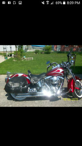 gorgeous Springer Softail