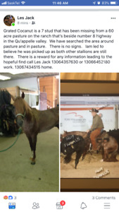 Missing horse