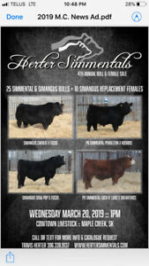 Herter Simmentals 4th Annual Bull & Female Sale
