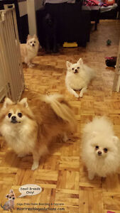 *HOLIDAYS FULL* CAGE-FREE BOARDING SMALL DOGS IN HOME OF TRAINER West Island Greater Montréal image 9