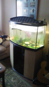 65 gal plus stand