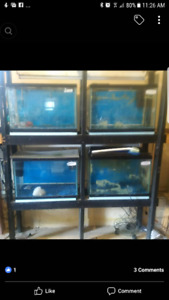 4x 20 gallon tank with stand