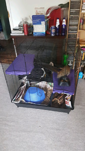 2 rats, cage, food, bedding all that's needed