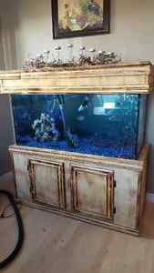 90 gallon fish tank with everything