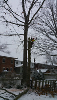 Removal,pruning,free quotes