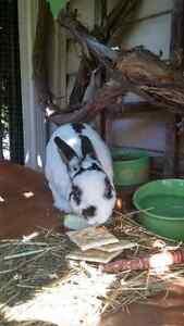 Une lapine