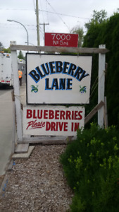 No spray blueberries $1.50lb  Ready picked Special