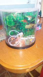 3 gallon fish tank. like new