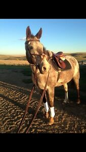Horse for half/ possible full lease