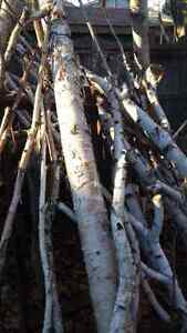 Birch decor Oakville / Halton Region Toronto (GTA) image 3