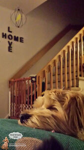 *HOLIDAYS FULL* CAGE-FREE BOARDING SMALL DOGS IN HOME OF TRAINER West Island Greater Montréal image 7