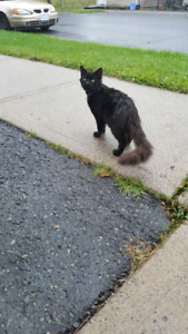 This cat has been hanging around my place.