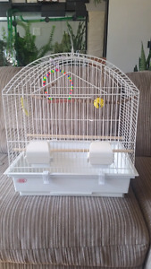 Budgie and cage in need of a new home.