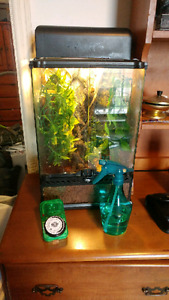 URGENT!! Two male Crested Geckos with everything!! Must go!