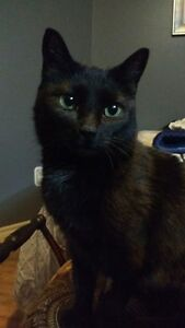 Loving and affectionate 2 year old female cat  for adoption