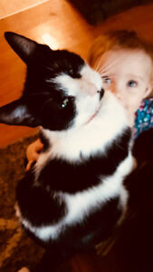Lost!! Black and white short haired 2 year old spayed female