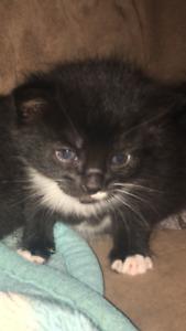 1 black and white kitten left 120